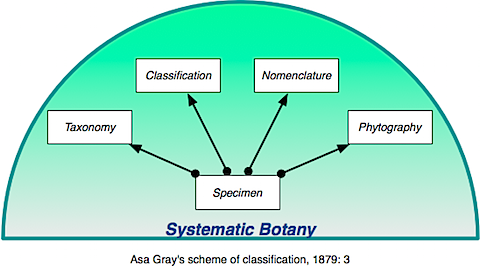Systematics Gray.png