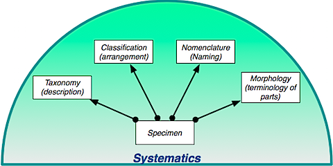 Systematics.png